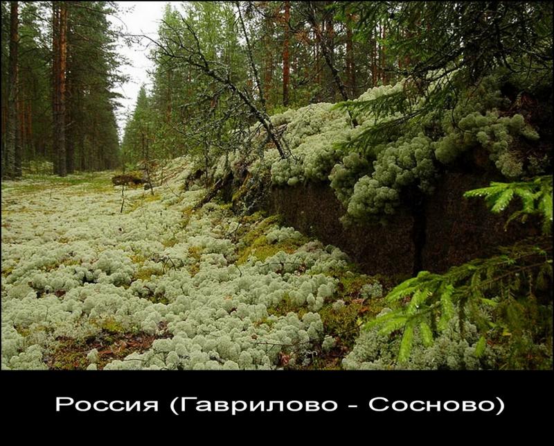 Заброшенная и заросшая железная дорога. Гаврилово-Сосново (Россия).