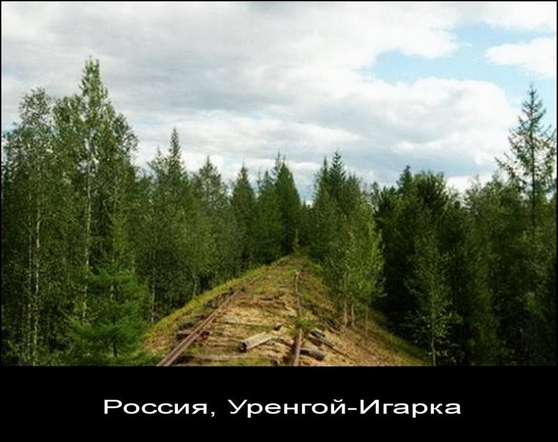 Заброшенная железная дорога. Уренгой-Игарка (Россия).
