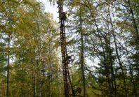 Разъезды и семафоры железной дороги Чум — Салехард — Игарка