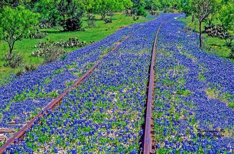 Старая железная дорога (Техас, США)