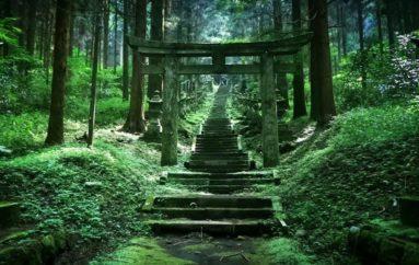 Как природа забирает обратно заброшенные места | Чарующие фото