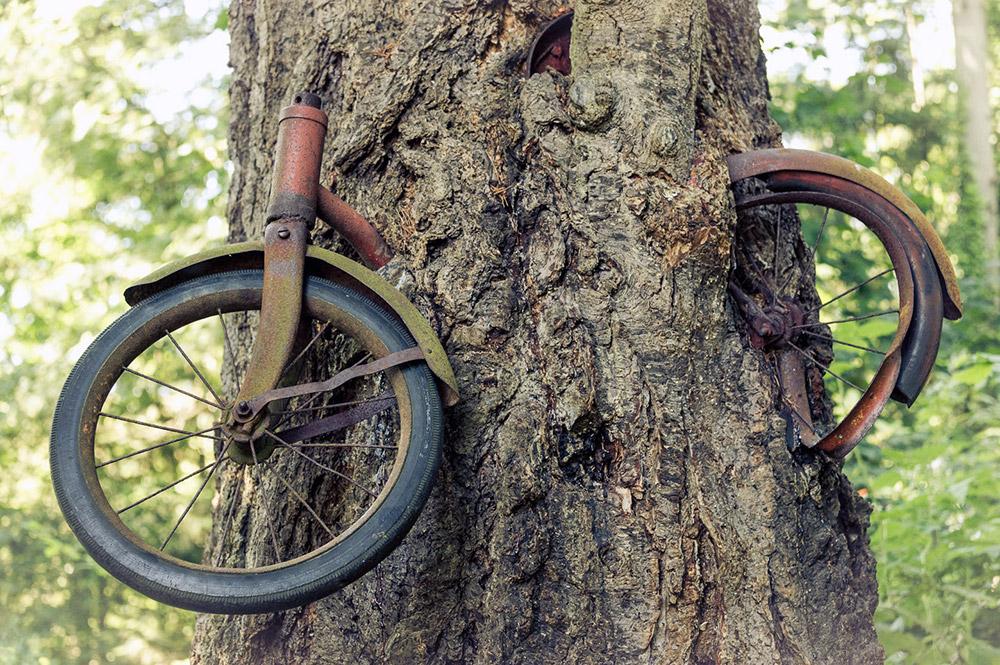 Дерево, которое съело велосипед.