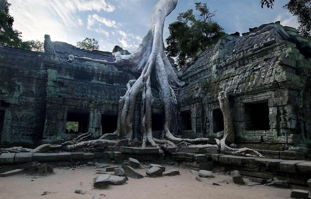 Корни гигантского дерева разрушают древний храм