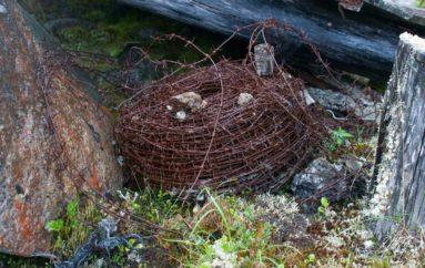 Борлаг системы ГУЛАГ | Где добывали урановую руду