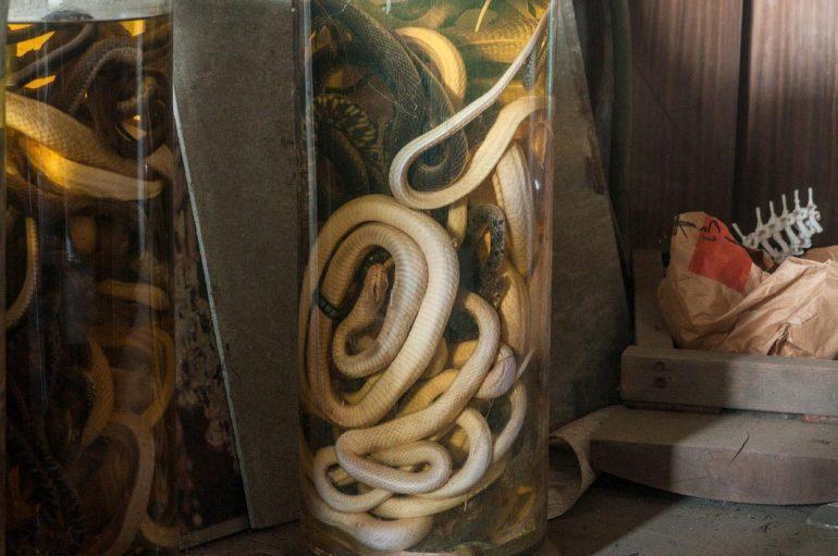 Полузаброшенная комната мёртвых змей