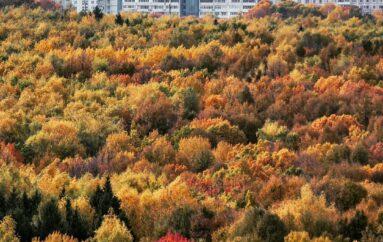 🍁 Битцевский лес 🍁 — второй по величине парк Москвы
