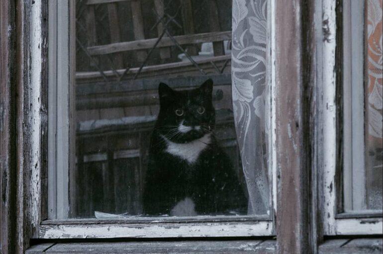 Кошки — главные жители городов, бесстрашные герои окон, балконов и крыш