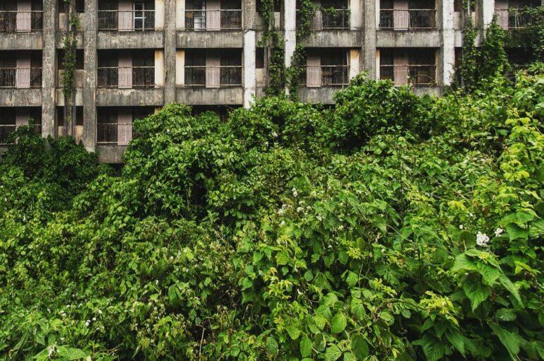 Буйная растительность заброшенного города 🌱🌿🌴